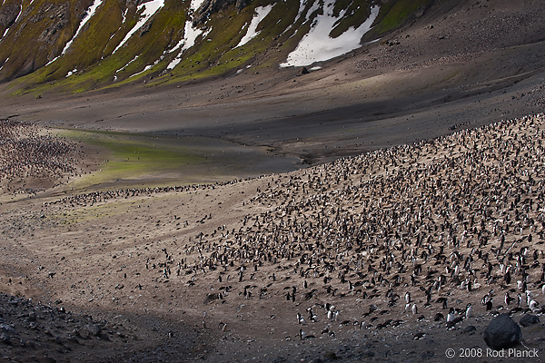 Chinstrap Penguin Colony, (Pygoscelis antarctica), Baily Head, Deception Island