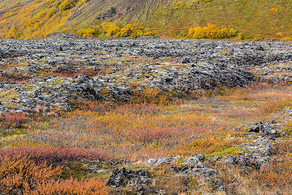 Iceland: Autumn Landscapes and Fire in the Sky Tour