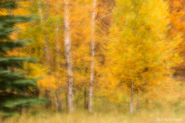 Autumn Forest, Northern Michigan, Multiple Exposure
