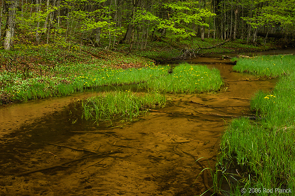 Small Stream, Spring, Pictured Rocks National Lakeshore, Upper Peninsula, Michigan
