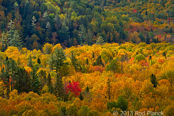 Autumn Forest, Foggy Bogs and Lake Superior Shoreline, Porcupine Mountains Wilderness State Park and Environs, Michigan