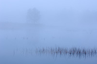 Foggy Morning, Autumn, Northern Michigan
