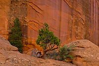 Long Canyon, Section of Long Canyon, Grand Staircase-Escalante National Monument, Utah