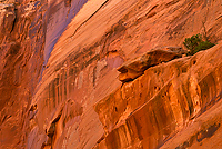 Upper Spring Canyon, Capitol Reef National Park, Utah